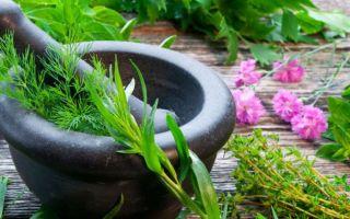Травы, которые влияют на память и концентрацию