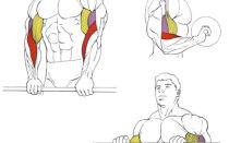Упражнения Зоттмана, или как быстро накачать предплечья.
