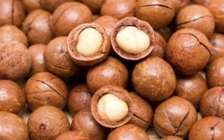 Удивительная польза орехов макадамии