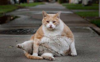 Домашние животные на диете