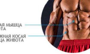 Классическая анатомия о мышцах живота (пресса) – в подробностях