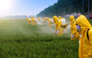 Пестициды в продуктах питания. Как их устранить?