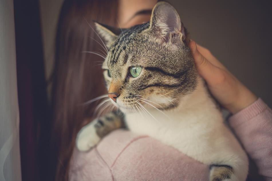 кошка влияет на наше здоровье