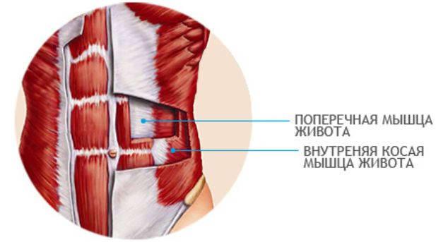 внутренние мышцы пресса